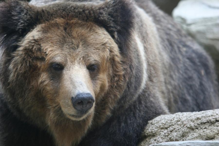 キャンプで熊に遭遇したら?安全策や注意点などを徹底解説!