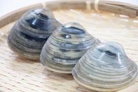 ホンビノス貝の砂抜き方法は?塩抜き・モヤ抜きのやり方やレシピも