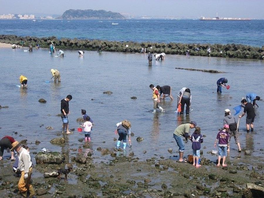 神奈川の潮干狩りスポットまとめ!おすすめの時期や料金も!