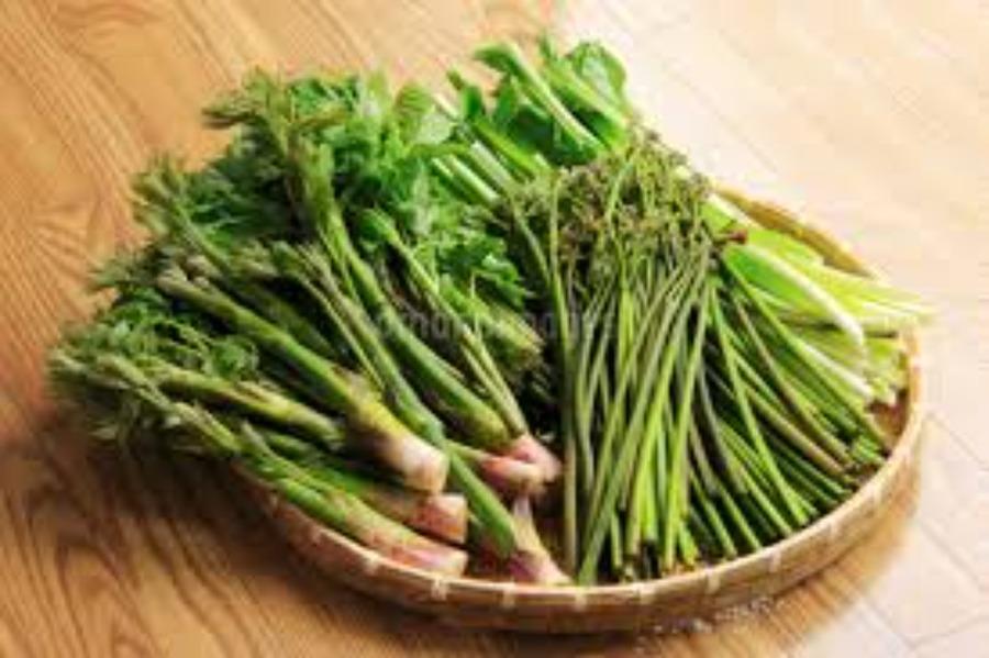 春の山菜の種類や特徴まとめ!天ぷらなど美味しい食べ方もチェック!