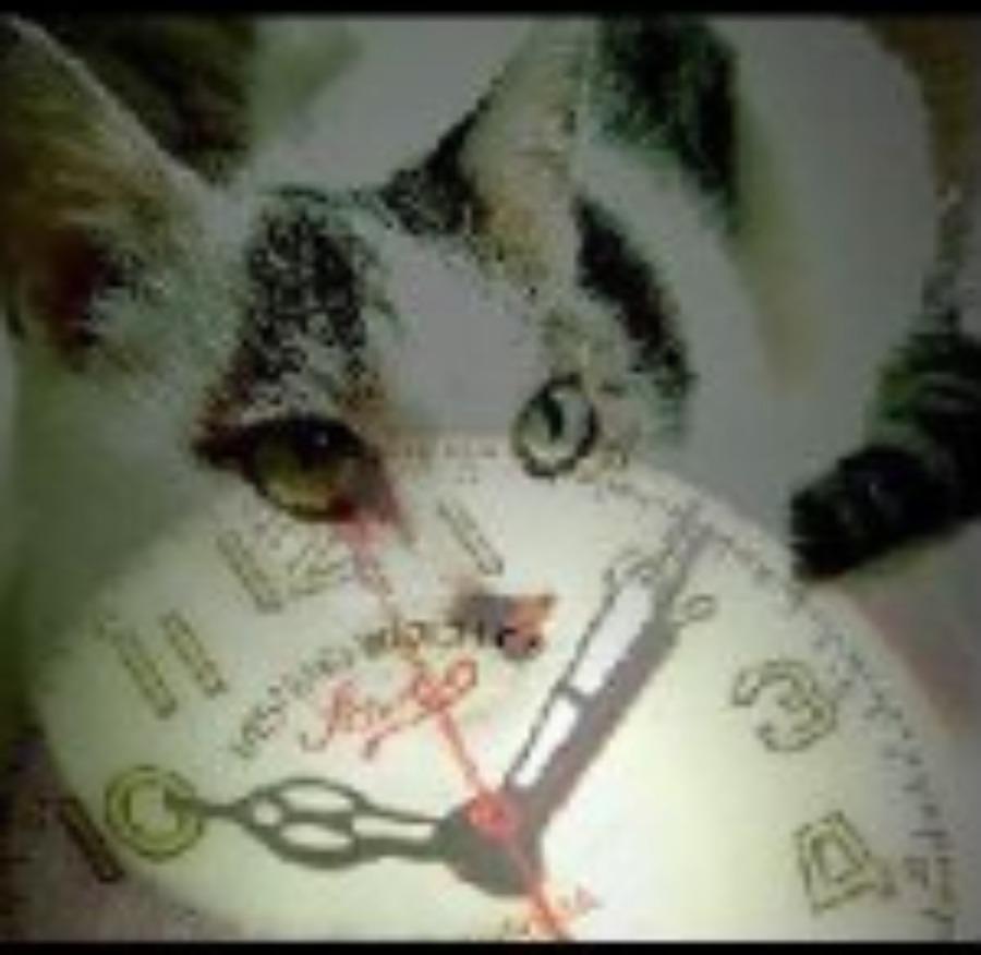 機械式時計をとことん楽しむ!「僕と猫と時計と…徒然なるままに…」の魅力