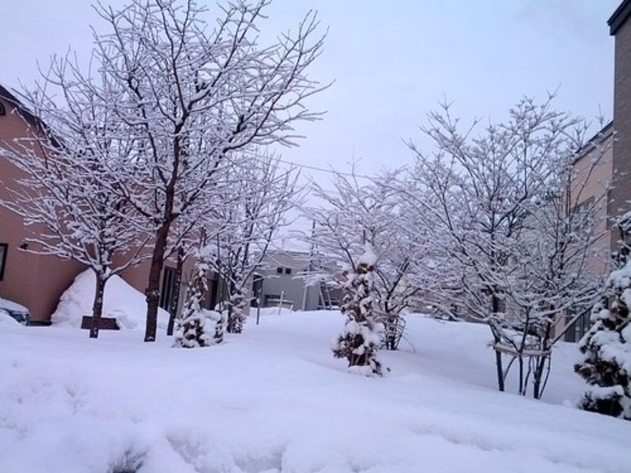 雪景色が綺麗な日本の冬絶景!おすすめの観光スポットを紹介
