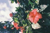 ハワイの花の名前や種類・花言葉を紹介!日本にはない南国の植物も