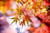 南アルプスで紅葉!仙丈ヶ岳などおすすめの登山・隠れた穴場や時期を紹介