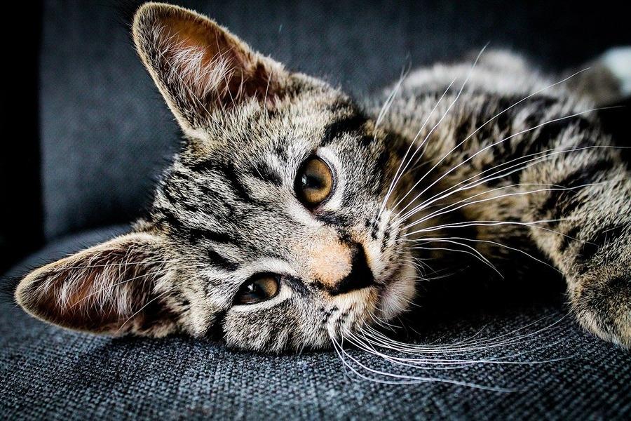 秋葉原のおすすめ猫カフェ!安い店や人気店の値段・営業時間も紹介