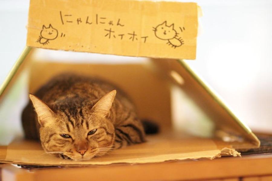 新宿の猫カフェおすすめランキング!安い人気のお店も紹介