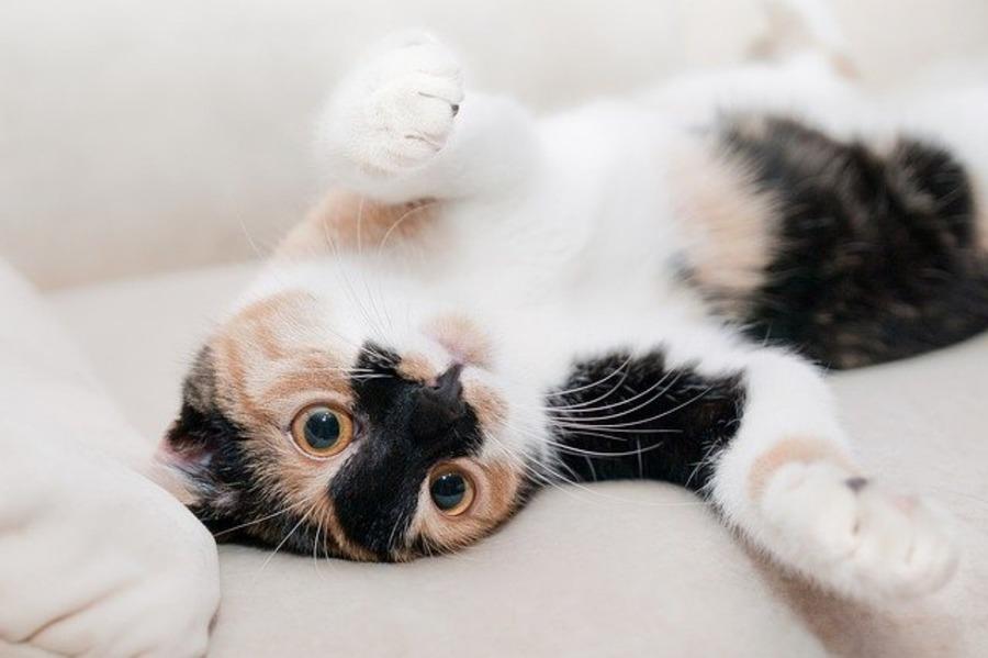 札幌のおすすめ猫カフェ!人気店の料金やイベント情報についても紹介
