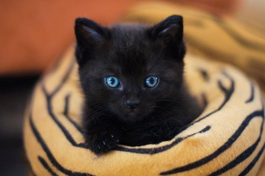 浅草のおすすめ猫カフェ!人気店の値段や特徴・人気の理由も紹介