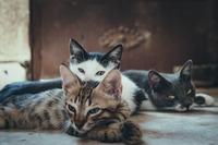 猫寺は福井の御誕生寺!猫好き必見のおみくじ・お守り・アクセスを紹介