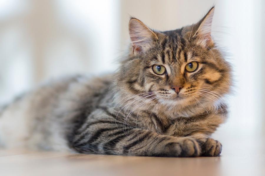 千葉県の猫カフェおすすめ人気ランキング!料金・営業時間も紹介