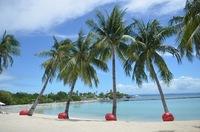 フィリピン・セブ島でジンベイザメと泳ぐ!ツアーや時期・値段を紹介