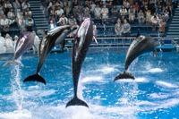 アクアパーク品川のおすすめデートプラン!水族館デートを楽しもう