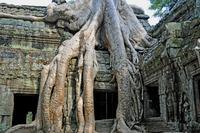 タプロームはカンボジアの世界遺産!遺跡の見どころや周辺ホテルを紹介