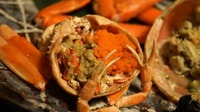 香箱蟹の値段や食べ方は?美味しい時期・金沢のおすすめ店も紹介