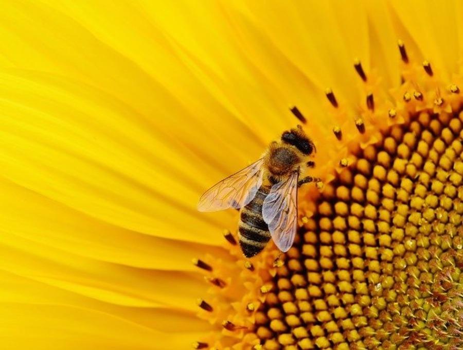 蜂天国は長野県東御市にあるスズメバチの博物館!料金も紹介