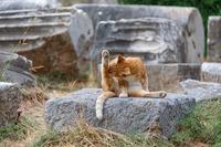 雲林寺は萩(山口県)の猫寺!おすすめのネコグッズやアクセスを紹介