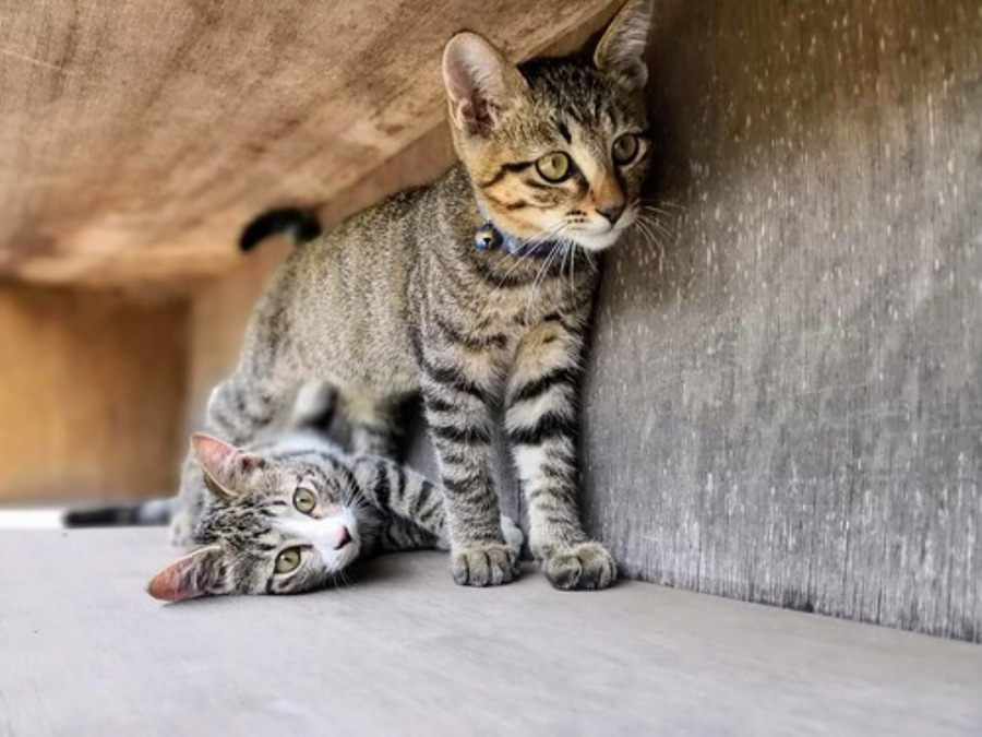 谷中は猫の街!谷根千の商店街や猫カフェ•猫グッズの雑貨店を紹介