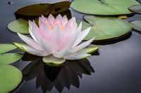 兵庫県の心霊スポットランキング!神戸・西宮や六甲山などの心霊スポットを紹介