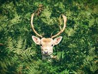広島県宮島の鹿は凶暴?厳島神社では鹿せんべいなどの餌やり禁止?