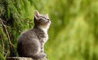 プティット村は吉祥寺のおすすめ観光スポット!人気の猫カフェも紹介入場料も紹介