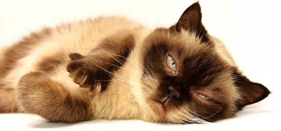 岡山のおすすめ猫カフェ!値段や特徴・里親探しについても紹介