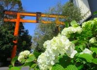 氷川神社は川越の人気パワースポット!縁結びのご利益やアクセスも紹介