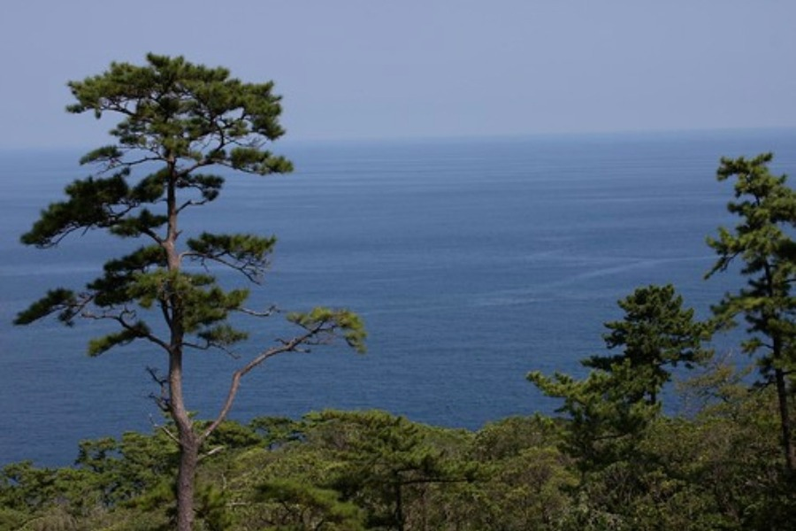 伊豆大島への行き方!料金や東京からフェリーで行く方法も紹介