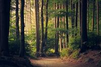 ユーシン渓谷は神奈川・丹沢の秘境!アクセス方法やハイキングコースを紹介
