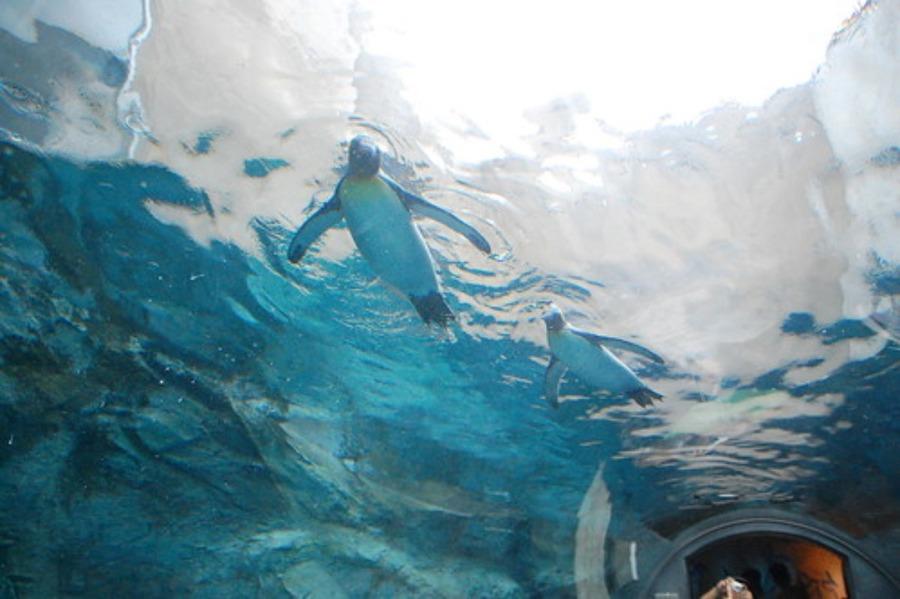 旭川の動物園・旭山動物園のお土産おすすめ!人気の限定グッズやお菓子を紹介