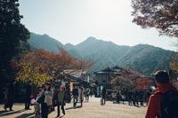 宮島のお土産ランキング!人気のお菓子・厳島神社のおすすめも紹介