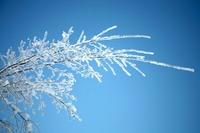 スノーモンスター(樹氷)を見に行こう!蔵王などおすすめスポットを紹介