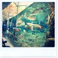 福井の越前松島水族館でふれあい体験!料金やアクセス方法も紹介