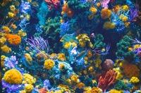 九州の水族館おすすめ人気ランキング!デートで行きたい水族館も紹介