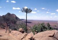 アフリカを観光しよう!おすすめの観光地や有名スポットを紹介
