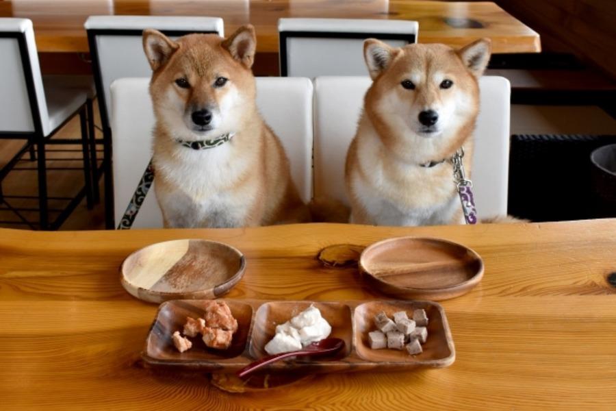 東京の犬カフェランキング!都内の犬と触れ合える人気カフェを紹介