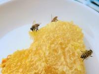 蜂の巣はどうやって食べるの?巣蜜の食べ方・味や栄養などを紹介