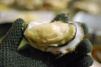赤穂の牡蠣小屋で食べ放題!旬の時期や兵庫のおすすめ店などを紹介