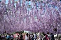 栃木弁はかわいい!栃木県の方言やなまり一覧(告白や会話について紹介)