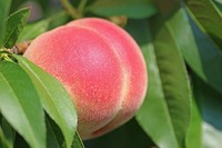 山梨の桃パフェおすすめ店!美味しいスイーツの人気店やカフェを紹介