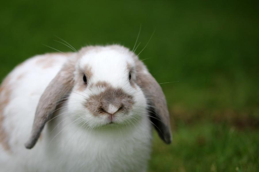 大阪のうさぎカフェでウサギとふれあいが楽しめる!梅田にはない?