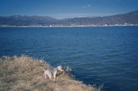 御神渡りは諏訪湖の凍結現象!氷の出現条件や場所・時期などを紹介