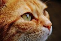 吉祥寺のおすすめ猫カフェランキング!値段や特徴・人気の理由も紹介