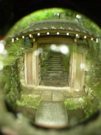 福井の苔寺(平泉寺白山神社)の見どころ!アクセス方法も紹介