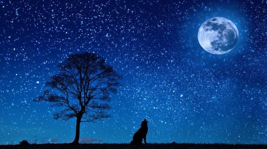 沖縄で星空をみよう!天体観測のおすすめスポットや星空ツアーを紹介