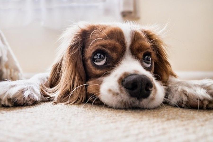 いぬのじかんは犬好きさんに人気のドッグカフェ!料金や予約方法など