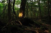 青木原樹海の心霊現象!富士の最恐スポットの怖い噂の謎に迫る