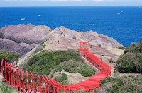 山口県の元乃隅神社(元乃隅稲成神社)は鳥居の多い神社!観光の見所を紹介