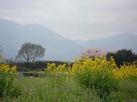 益子町(栃木)のおすすめ観光スポット!人気グルメや周辺の見どころも