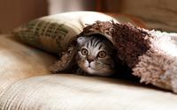 熊本県のおすすめ猫カフェ!市内を中心に人気店の料金についても紹介