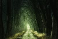 犬鳴峠は最恐心霊スポット!トンネルの過去の事件・怖い話や場所を紹介
